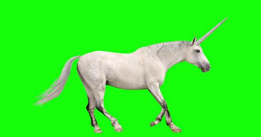 Unicorn Looping Gait Cycles Videos animados
