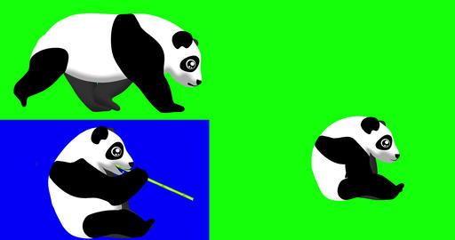 Cartoon Panda Bear CG動画