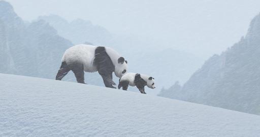 Panda Bears in Snow CG動画