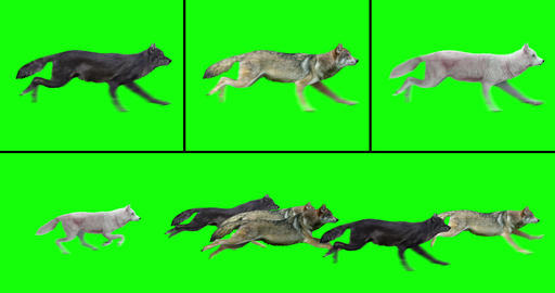 Pack of Wolves Running Videos animados