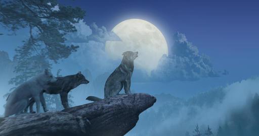 Wolves Howling at Moon CG動画