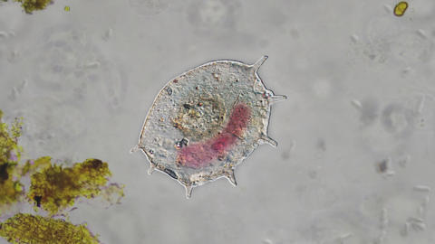 Microorganism Dying Animation