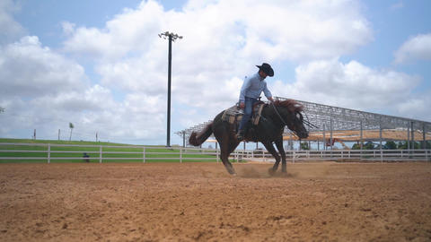 Horse spinning in circles. Stallion brown horse run at ranch. Slow motion shot Acción en vivo