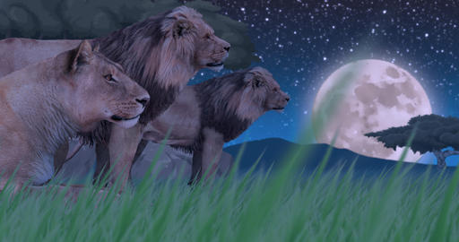 Lion Pride in Moonlight Animation