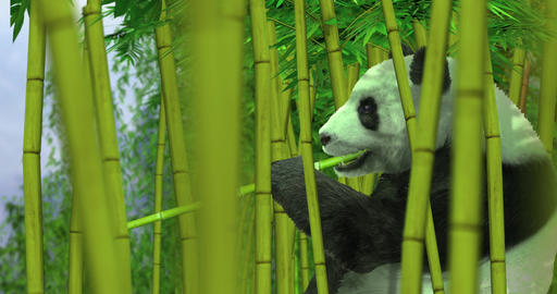 Panda Bear in Bamboo Forest Animation