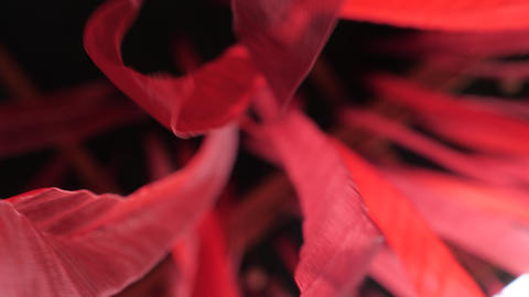 Fluttering red background ribbons. Black background with red color lines. Red Live Action