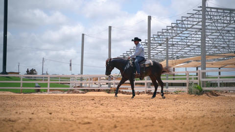 Tel Aviv, Israel - JULY 12, 2020: Stallion brown horse run at ranch. Slow motion Acción en vivo
