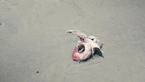 Death Fish on Beach Live Action