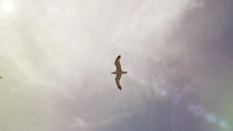 White sea gulls soars in the sunny blue sky without clouds, front shot. Flights Live Action