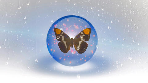 Butterfly behind wet glass Live Action