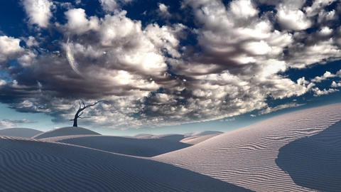 Bare tree in desert Animation