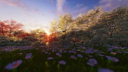 Spring forest, sunrise, camera panning Animation