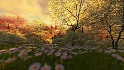 Spring scenery at sunrise, camera fly Animation
