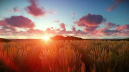 Wheat field against beautiful timelapse sunset Animation