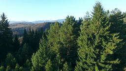 Aerial view of green forest, wildlife preservation Footage