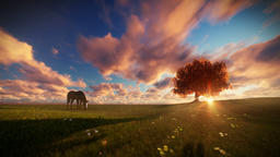 Beautiful horse and tree of life at sunset, travelling shot Animation