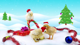 Celebration Chinese New Year of the Rooster 2017, three new born cute roosters Footage