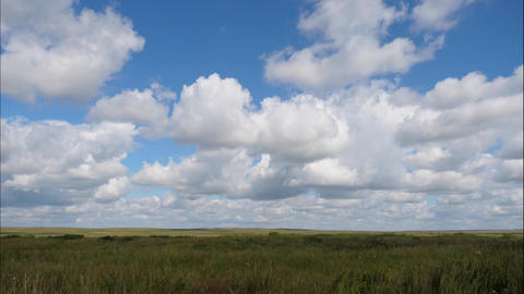 Summer Landscape with Field of Grass blue Sky Green Grass Field Landscape with Fantastic Clouds Live Action