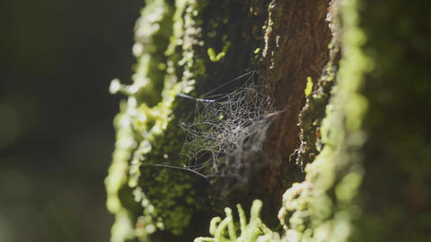 Spider Web On Tree Branches And Sun Reflection Live Action
