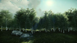 Birch tree and timelapse clouds, tilting Animation