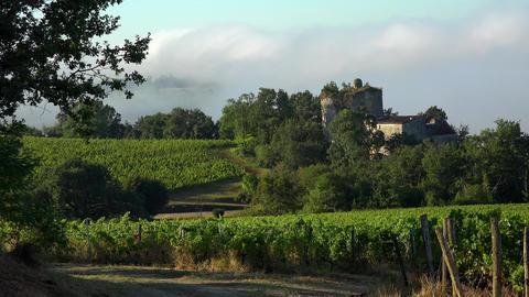 Timelapse, Bordeaux Vineyard at sunrise and fog, Entre deux mers, Langoiran Live Action