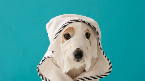 Cute dog in sheet mask Live Action