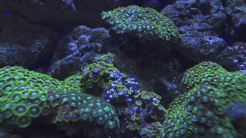 Real time shot on healthy and dead corals under the ocean in the deep Live Action