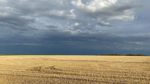 On the empty field after harvesting in sunny day before storm Acción en vivo