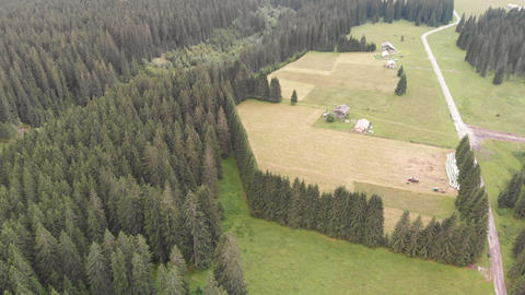 Overhead aerial view of woods and pine trees, Italian Alps GIF