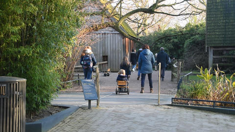 Lemurenland Part Of The Artis Zoo Amsterdam The Netherlands 2019 Live Action