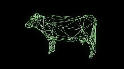 3d rendering - wire frame model of Isolated classic milk cow rotate Animation