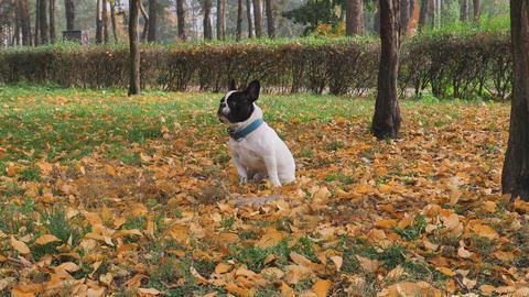 dog runs leaf fall Live Action