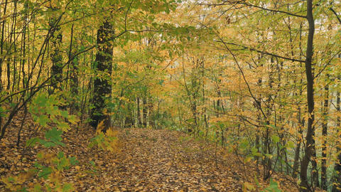 beautiful quiet landscape with yellow leaves on the trees Live Action