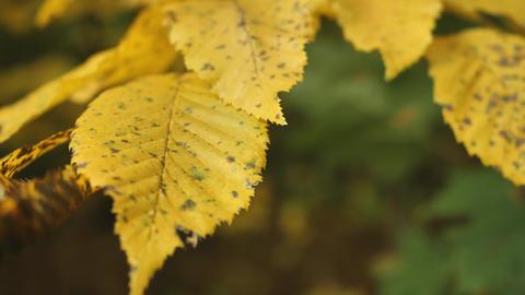 Details autumnal foliage Live Action