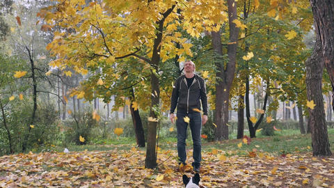 Joyful person with dog looking on leaf fall Live Action
