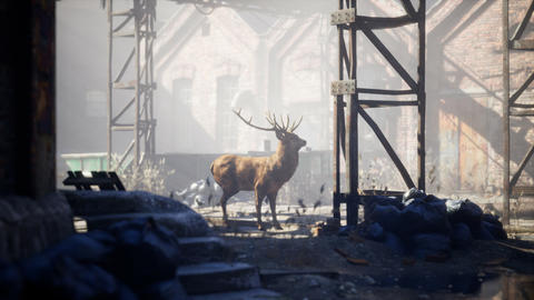 Wild deer rooming around the streets in abandoned city GIF