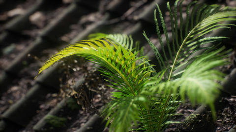 moss and fern on old roof GIF
