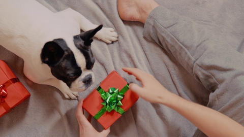guy celebrating new year with lovely pet Live Action