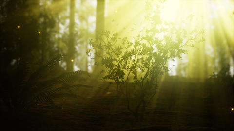 firefly in misty forest with fog GIF