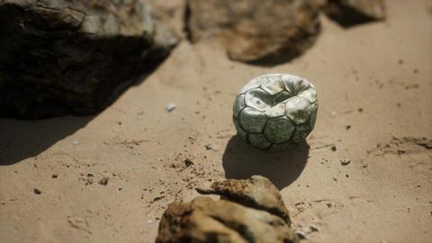 old football ball on the sand beach GIF