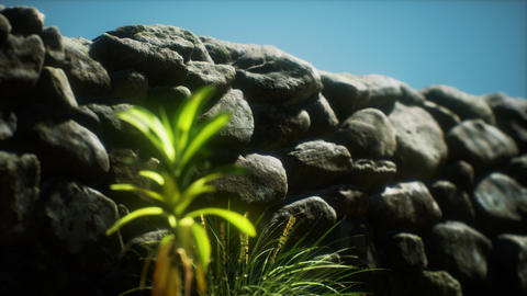 grass and stone wall in the north of England countryside GIF