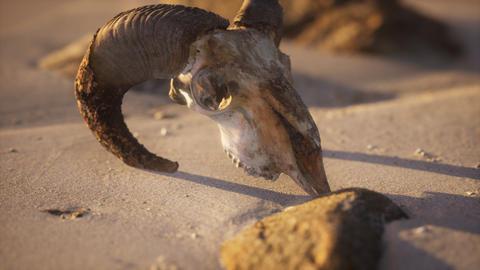 Skull with ram horns on the beach GIF