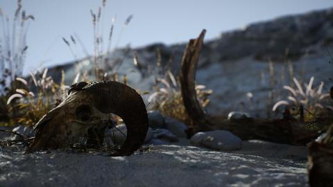 Skull of a dead ram in the desert GIF