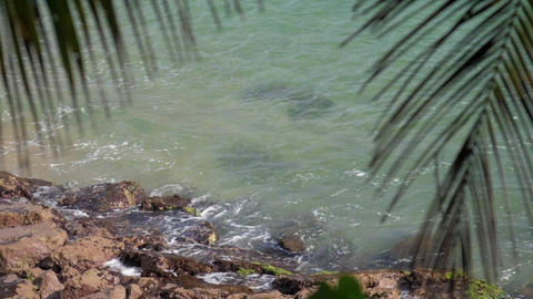 palm leaves against boundless blue sea waving near stones GIF