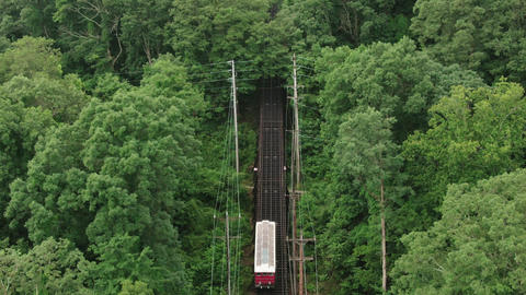 A Railway In A Forest Live Action