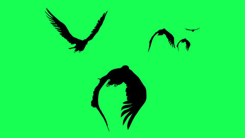3d animation silhouette of Falcons Gliding and Flapping isolated on green screen Animation