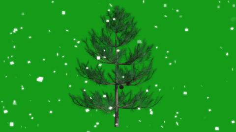Christmas celebrations motion graphics with green screen background Videos animados