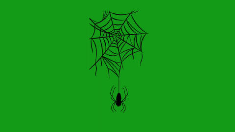 Spooky spider motion graphics with green screen background Animation