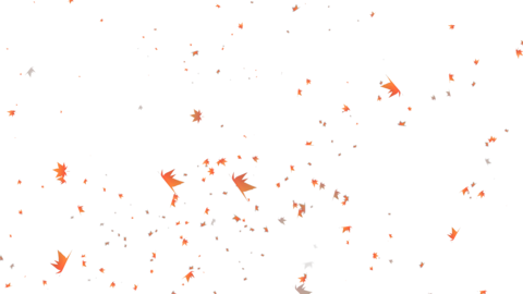 Autumn leaves on transparent background Animation