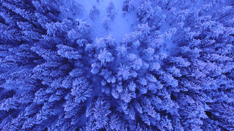Aerial Shot Of Forest Covered In Snow GIF